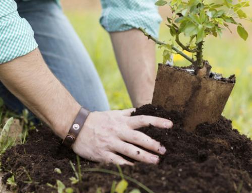 Winter aanbiedingen voor uw tuin